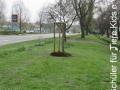 2019_04_13-Kandel-Bäume-für-Brillen-09