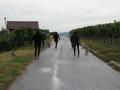 2019_08_07-Animal-hope-e.V.-Illingen-06